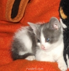 Это мой котёнок когдо ему было 2 месяca. - z 004.jpg