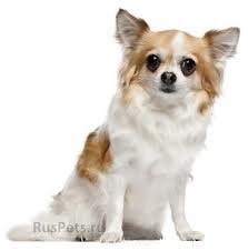 Какую породу собаки вы порекомендуете завести? - imgres.jpg
