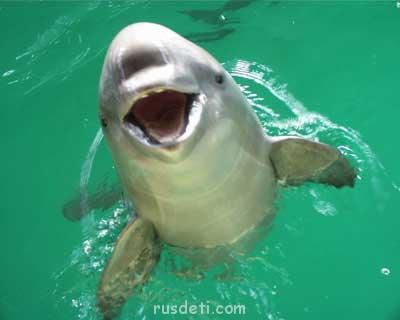 Очаровательные животные - porpoise1.jpg