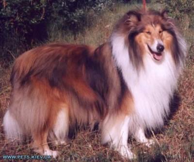 Какую породу собаки вы порекомендуете завести? - b903c52e8211bd9bf6707eb8ff53fab3.jpeg