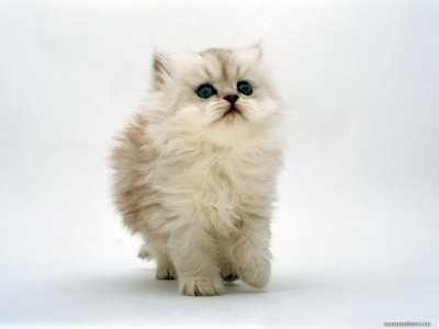Наши любимые животные - pushistiy_komochek_1024.jpg