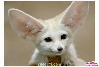 Очаровательные животные - kQhMGmxDEds.jpg