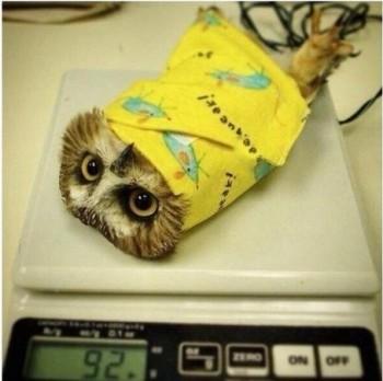Очаровательные животные - owl.jpg