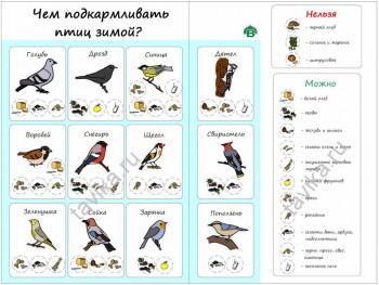 Зимующие птицы. - Журнал_Василисы.jpg