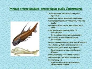 Природоведение - отличный урок  - 0010-010-ZHivaja-iskopaemaja-kistepjoraja-ryba-Latimerija.jpg
